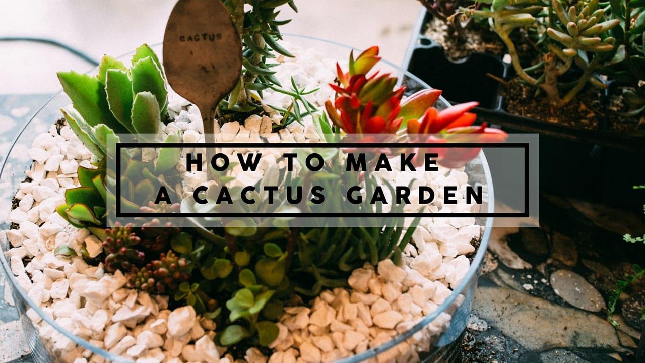 Merveilleux How To Make A Cactus Garden